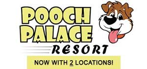 Pooch Palace Resort